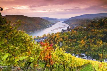 GER8968AW Vineyards over Bacharach, Rhineland-Palatinate, Germany