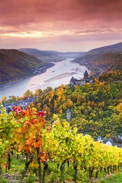 GER8969AW Vineyards over Bacharach, Rhineland-Palatinate, Germany