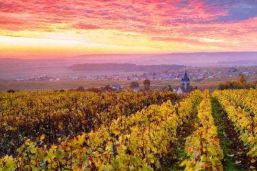 FRA8906AW Colorful sunrise over the vineyards of Ville Dommange, Champagne Ardenne, France