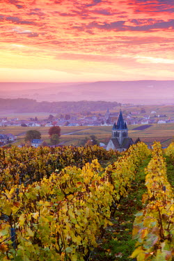 FRA8907AW Colorful sunrise over the vineyards of Ville Dommange, Champagne Ardenne, France