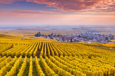 FRA8913AW Sunset oevr the vineyards of Oger, Champagne Ardenne, France