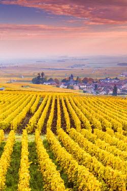FRA8914AW Sunset oevr the vineyards of Oger, Champagne Ardenne, France