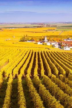 FRA8923AW Oger, Champagne Ardenne, France