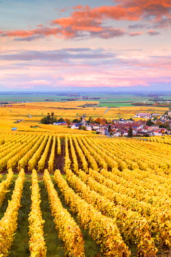 FRA8928AW Sunset over the vineyards of Oger, Champagne Ardenne, France
