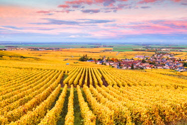 FRA8929AW Sunset over the vineyards of Oger, Champagne Ardenne, France