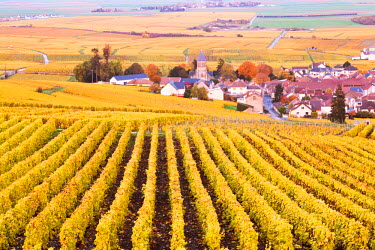 FRA8930AW Oger, Champagne Ardenne, France
