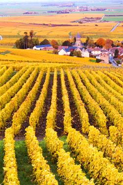 FRA8931AW Oger, Champagne Ardenne, France