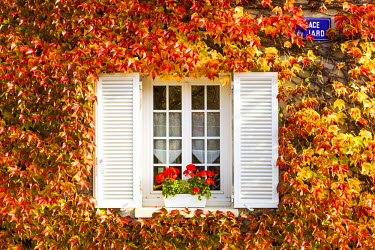 FRA8936AW Typical window surrounded by vine in autumn, Champagne Ardenne, France