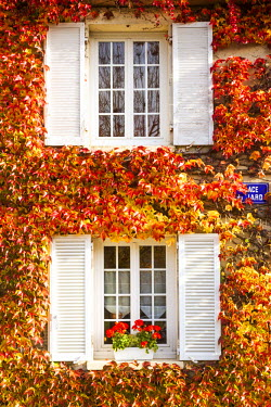 Typical window surrounded by vine in autumn, Champagne Ardenne, France
