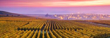 FRA8939AW Misty sunrise over Oger, Champagne Ardenne, France
