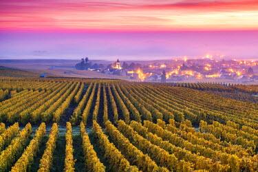FRA8940AW Misty sunrise over Oger, Champagne Ardenne, France