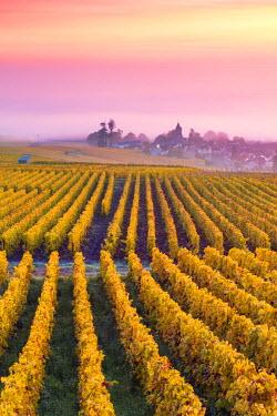 FRA8942AW Misty sunrise over Oger, Champagne Ardenne, France