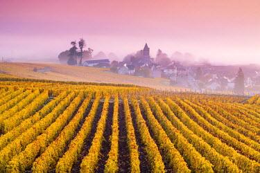 FRA8943AW Misty sunrise over Oger, Champagne Ardenne, France