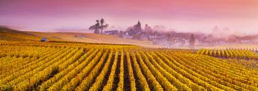 FRA8944AW Misty sunrise over Oger, Champagne Ardenne, France