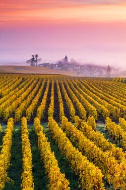 FRA8945AW Misty sunrise over Oger, Champagne Ardenne, France