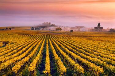FRA8946AW Vineyards in the mist, Mesnil sur Oger, Champagne Ardenne, France