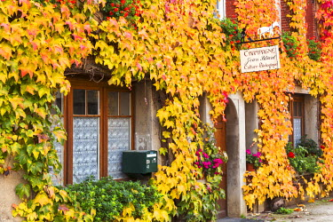 FRA8951AW Typical house covered with vines, Hautvilliers, Marne valley, Champagne Ardenne, France