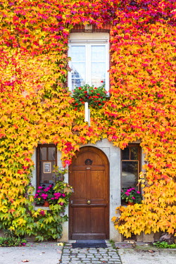 FRA8953AW Typical house covered with vines, Hautvilliers, Marne valley, Champagne Ardenne, France