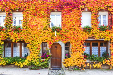FRA8954AW Typical house covered with vines, Hautvilliers, Marne valley, Champagne Ardenne, France