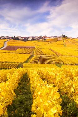 FRA8956AW Vineyards of Cramant, Champagne Ardenne, France