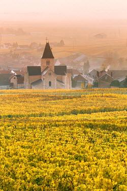 FRA8960AW Mesnil sur Oger, Champagne Ardenne, France