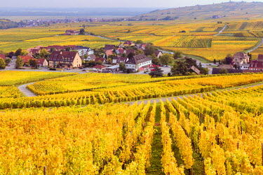 FRA8864AW Vineyards, Riquewihr, Alsace, France
