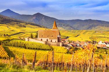 FRA8865AW Vineyards, Hunawihr, Alsace, France