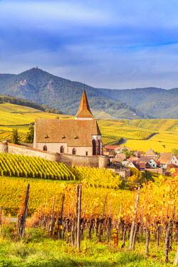 FRA8866AW Vineyards, Hunawihr, Alsace, France