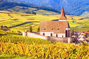 FRA8867AW Vineyards, Hunawihr, Alsace, France