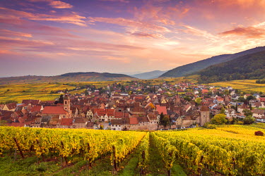 FRA8869AW Sunset over the vineyards surrounding Riquewihr, Alsace, France
