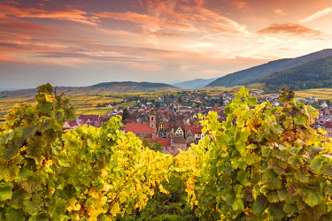 FRA8871AW Sunset over the vineyards surrounding Riquewihr, Alsace, France