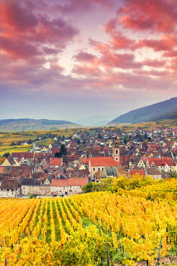 FRA8876AW Sunset over the vineyards surrounding Riquewihr, Alsace, France