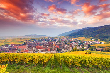 FRA8877AW Sunset over the vineyards surrounding Riquewihr, Alsace, France