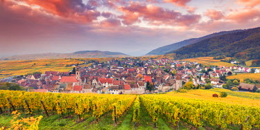 FRA8878AW Sunset over the vineyards surrounding Riquewihr, Alsace, France