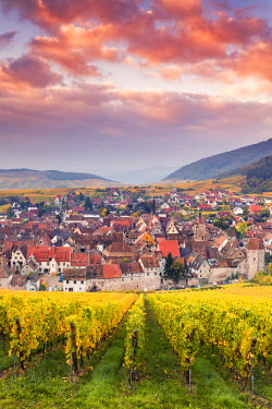 FRA8879AW Sunset over the vineyards surrounding Riquewihr, Alsace, France