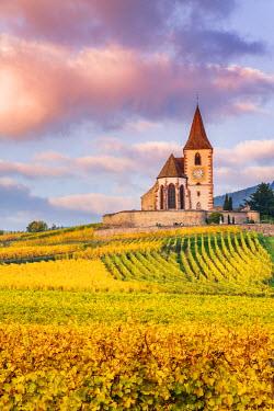 FRA8880AW Vineyards, Hunawihr, Alsace, France