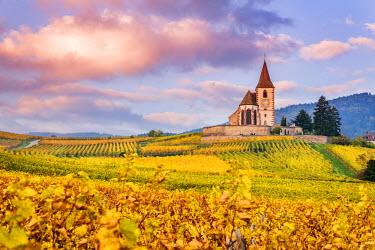 FRA8881AW Vineyards, Hunawihr, Alsace, France