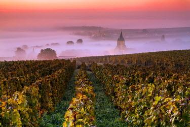 FRA8884AW Misty sunrise over the vineyards of Ville Dommange, Champagne Ardenne, France