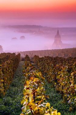FRA8885AW Misty sunrise over the vineyards of Ville Dommange, Champagne Ardenne, France