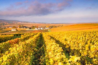 FRA8887AW Vineyards near Chigny Les Roses, Champagne Ardenne, France