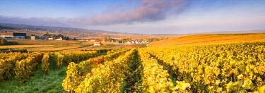 FRA8888AW Vineyards near Chigny Les Roses, Champagne Ardenne, France