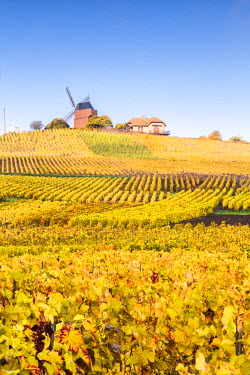 FRA8891AW Windmill and vineyards, Verzenay, Champagne Ardenne, France