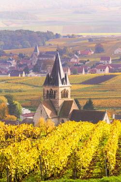 FRA8892AW Vineyards of Ville Dommange, Champagne Ardenne, France