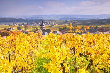 FRA8893AW Vineyards of Ville Dommange, Champagne Ardenne, France