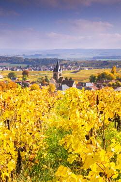 FRA8894AW Vineyards of Ville Dommange, Champagne Ardenne, France