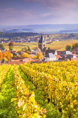 FRA8895AW Vineyards of Ville Dommange, Champagne Ardenne, France