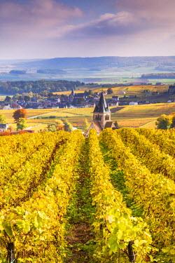 FRA8896AW Vineyards of Ville Dommange, Champagne Ardenne, France