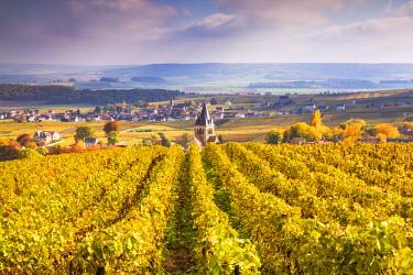 FRA8897AW Vineyards of Ville Dommange, Champagne Ardenne, France