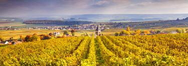 FRA8898AW Vineyards of Ville Dommange, Champagne Ardenne, France
