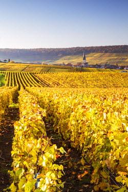 FRA8899AW Vineyards, Chamery, Champagne Ardenne, France